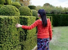 You'll commonly find shaped bushes in formal gardens.