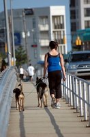Some communities require dog walkers to obtain a permit before walking dogs.