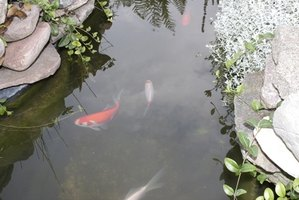 A backyard fish pond may be dangerous to fish if the correct products are not used.