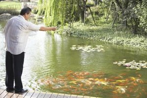 Red worms are sometimes found in koi ponds.