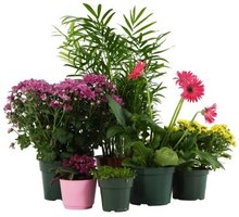 Potted plants need good soil drainage.