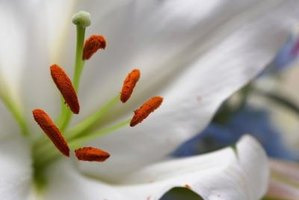 Many flowers make the difference between pistil and stamen obvious.