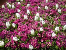 What outdoor plants are easy to take care of ehow for Easy care outdoor plants and flowers