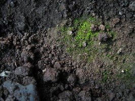 Healthy soil depends on a constant supply of decaying organic matter, including rotting plants.