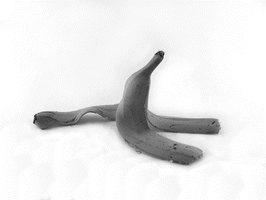 A rotting banana peel will attract both fungus gnats and fruit flies.