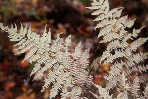 More than 12,000 species of ferns makes the identification process difficult.