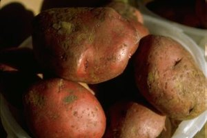 Red potatoes must be canned in a pressure canner.