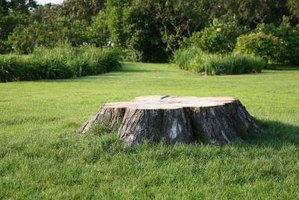 A hard-to-remove stump makes a good table or low seat.