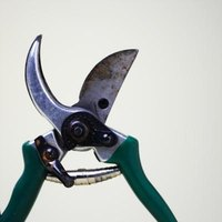 Keep pruning tools clean and sharp.