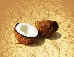 To enjoy the meat of the coconut, you must first remove its tough outer husk.