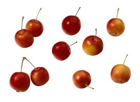 Crab apple fruits are small in size and contain seeds.