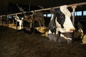 Dairy farmers is just one type of many jobs available in agriculture.