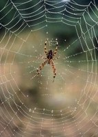 Keep spiders and other bugs outside instead of in your house.