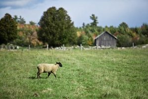 Pasture grass provides food for livestock and wildlife.