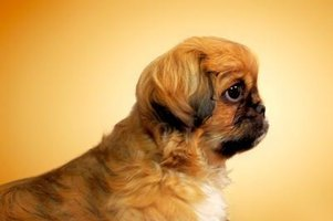 Puppy Lemon Laws in Indiana | eHow