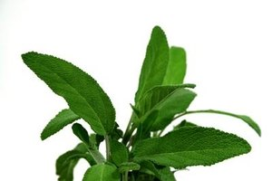 Sage has been used to ward off negative energy for centuries.
