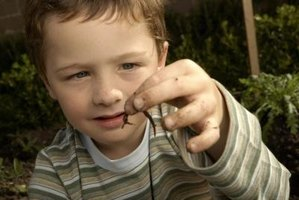 Enlist children to help catch worms for a fishing expedition.