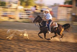Calf roping, or tie down roping, is one of seven major events in professional rodeo.