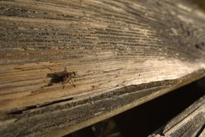 Keeping flies out of your barn can be a real challenge.