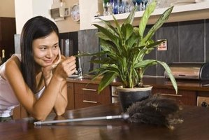 Indoor plants are used in offices and homes to help reduce dust levels.