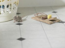 Traps can be used to catch mice.
