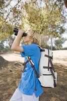 Summer camp activities include hiking and identifying trees using binoculars.