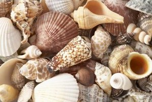 Seashells make beautiful decor items.