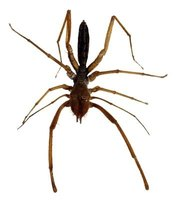 Brown spiders are common and come in various sizes and levels of danger.