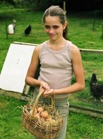 Use a basket filled with straw to safely collect eggs.