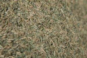 Grass seed needs contact with soil in order to germinate.