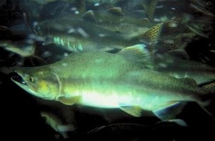 Fish hatcheries in West Virginia provide close to 1 million pounds of trout across the state.