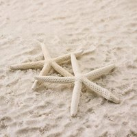 Starfish have more foes than friends.