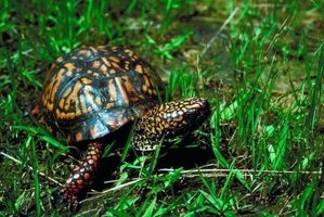 Turtles should be released into their native habitats.