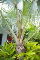 Most palm trees don't tolerate freezing temperatures.