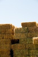 Hay bales are kept in stacks to help protect them from moisture.