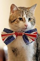 Grab your next British cat Facebook icon on Google.