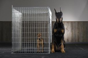 Learn how to use a dog cage properly to avoid the negative effects.