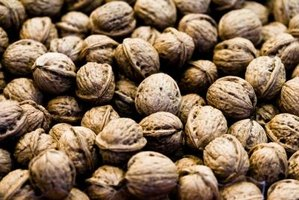It takes 10 years before the black walnut tree produces nuts.