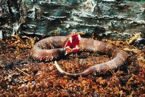 Protect your home and loved ones from poisonous water moccasins.