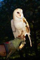 Owls are nocturnal hunters that have been known to snatch up small rodents and even the random household pet.