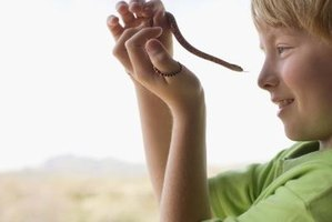 Snakes are an interesting topic for children to learn about.