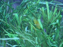 Heavily planted aquariums require less frequent cleaning.