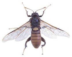 Wasps carry an alkaline venom that causes sting sites to feel itchy.