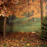 Design an autumn-themed backdrop for your festival's photo booth.