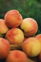 Slow down the ripening process by chilling peaches.