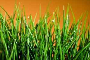 Soil amendments like peat moss can help you grow a healthier lawn.