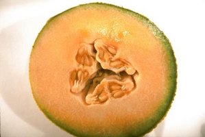 Cantaloupe cannot cross-pollinate with a watermelon.