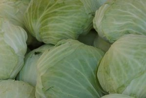 To help cabbage grow, prune away dead leaves.