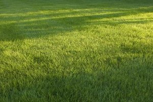 Weed and feed can  promote healthy, weed-free grass.