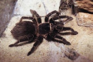 Identifying spiders can be difficult, even for professionals.